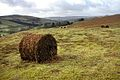 Baled bracken - geograph.org.uk - 321882.jpg
