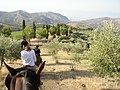 Ballade à cheval à Caltelbuono - panoramio.jpg