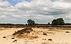 Balloërveld, natuurgebied in Drenthe 021.jpg