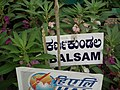 Balsam from Lalbagh flower show Aug 2013 7969.JPG