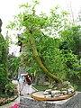 Bamboo (5905038162).jpg