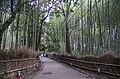 Bamboo grove-Arashyama - panoramio.jpg