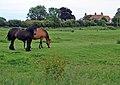 Barlings Hall and horses two - geograph.org.uk - 476305.jpg