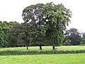 Baumgruppe - panoramio (1).jpg