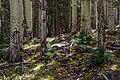 Bear Jaw Trail No. 26 (29650634470).jpg