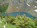 Beargrass, Alderson Lake Waterton Lakes NP - panoramio.jpg