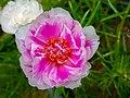 Beautiful Flora.jpg