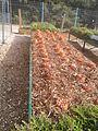Beds of vegetable and flowers in school garden, botanical garden, Jerusalem, Israel (3).jpg