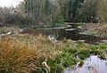 Bedwell Pond - geograph.org.uk - 381172.jpg