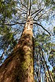 Beech Forest (AU), Great Otway National Park -- 2019 -- 1337.jpg