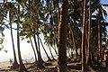 Behind the tree shadows.jpg
