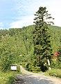 Belianske Tatry, z Tatranské kotliny na Plesnivec (1).JPG