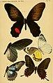 Berliner entomologische Zeitschrift (1865) Taf VI.jpg