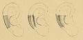 Bertillon - Identification anthropométrique (1893) 061.3.png