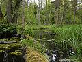 Białowieża National Park, Poland (4664687640).jpg