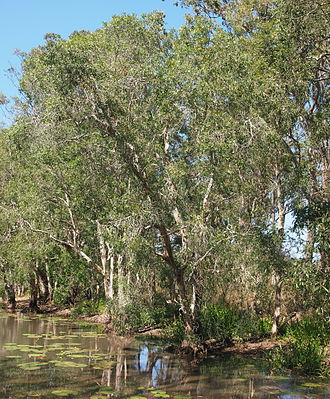 Mount Jim Crow National Park - Billabong fringed by Melaleuca leucadendra