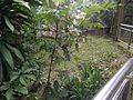 Bird Park in Kuala Lumpur (Malaysia) (25).jpg