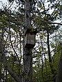 Bird feeder, Tűzkő Hill Forest, 2017 Budaörs.jpg