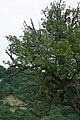 Birnbaum486.jpg