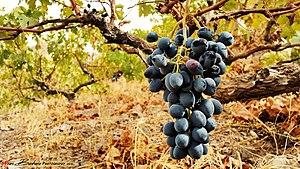 Black Grape - Black Grape, 1995