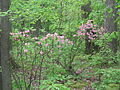 Black Moshannon SP Forest Flowers.jpg