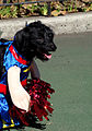 Black cheerleader (1701516714).jpg