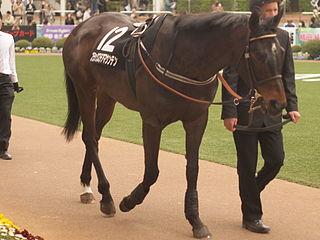 Blackstairmountain Irish-bred Thoroughbred racehorse