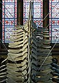 Blue Whale. Natural History Museum. London (35914454240).jpg