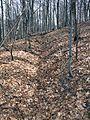 Bodruzal stopy prvej svetovej vojny v lesnom poraste Koprivneho.jpg