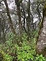 Bosque Cuatro Palos.jpg