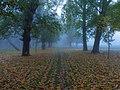 Bosque del Parral.jpg