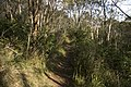 Bowral NSW 2576, Australia - panoramio (110).jpg