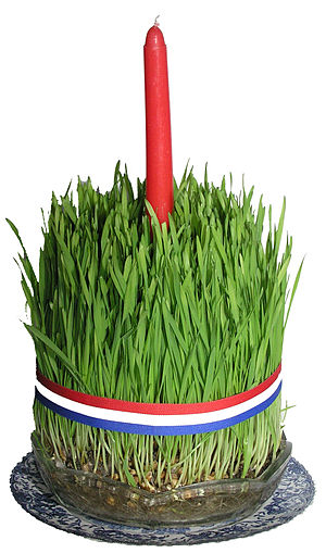 Badnjak (Croatian) - The pšenica (wheat grass), usually planted on St. Lucy's, are used for the Christmas candles.