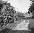 """Brajda ob vinogradu in lesena posoda """"strajh"""", Hom 1961.jpg"""