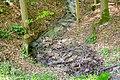 Brakel - 2018-05-01 - NSG Hinnenburger Forst (47).jpg