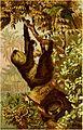 Brehms Tierleben - allgemeine Kunde des Tierreichs - mit 1800 Abbildungen im Text, 9 Karten und 180 Tafeln in Farbendruck und Holzschnitt (1890) (20414682395).jpg