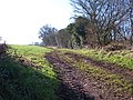 Bridleway from Hyde Bridge to Little Cowarne - geograph.org.uk - 113345.jpg