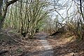 Bridleway heading north from Ware's Wood (2) - geograph.org.uk - 1253003.jpg