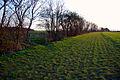 Bridleway near Morborne - geograph.org.uk - 394007.jpg