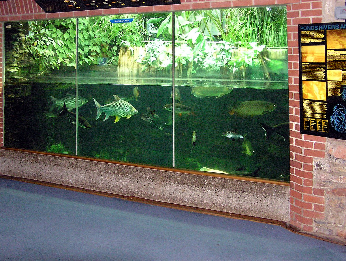 Aquarium Wiktionary