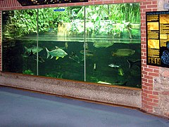 Aquarium at Bristol Zoo, England. Maintenance of filters becomes costly with high TDS.