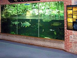 Bristol Zoo - The South East Asia tank in the zoo aquarium.