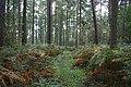 Bulmer Hag Woods - geograph.org.uk - 74853.jpg