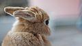 Bunny ears (5767988014).jpg