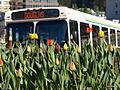 Bus 5130016.JPG