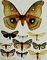 Butterflies and moths of Newfoundland and Labrador - the macrolepidoptera (1980) (20502221072).jpg