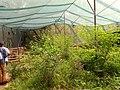 Butterfly farm.jpg