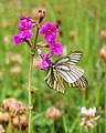 Butterfly with Flower.jpg