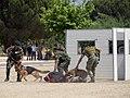 Cães de Guerra BOAT 23MAI18.jpg