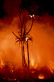 CSIRO ScienceImage 433 Fire at the Top End of Australia.jpg